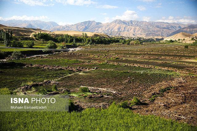 شهرستان دشتستان به قطب آموزش&zwnjهای مهارتی در حوزه کشاورزی تبدیل گردد