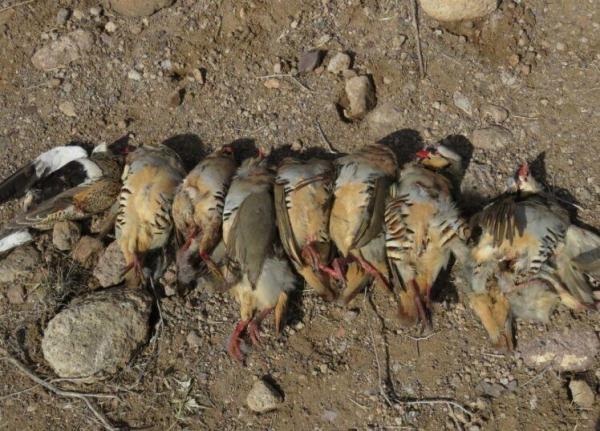 خبرنگاران متخلفان شکار غیرمجاز در سیرجان دستگیر شدند