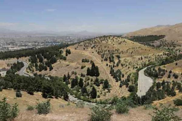 از جنگل های استان تهران چه می دانیم؟